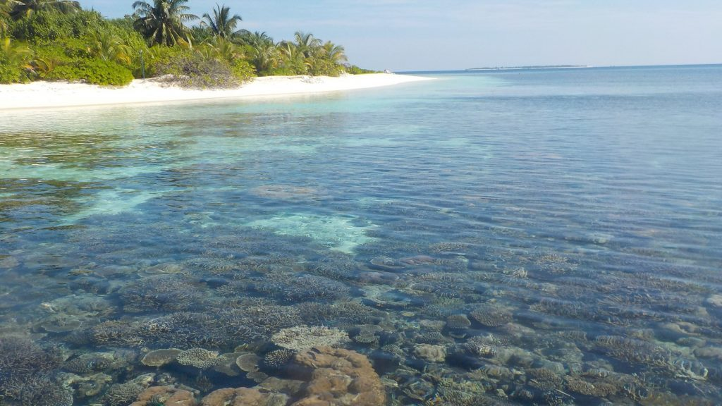 Imagining environmental research in the Maldives