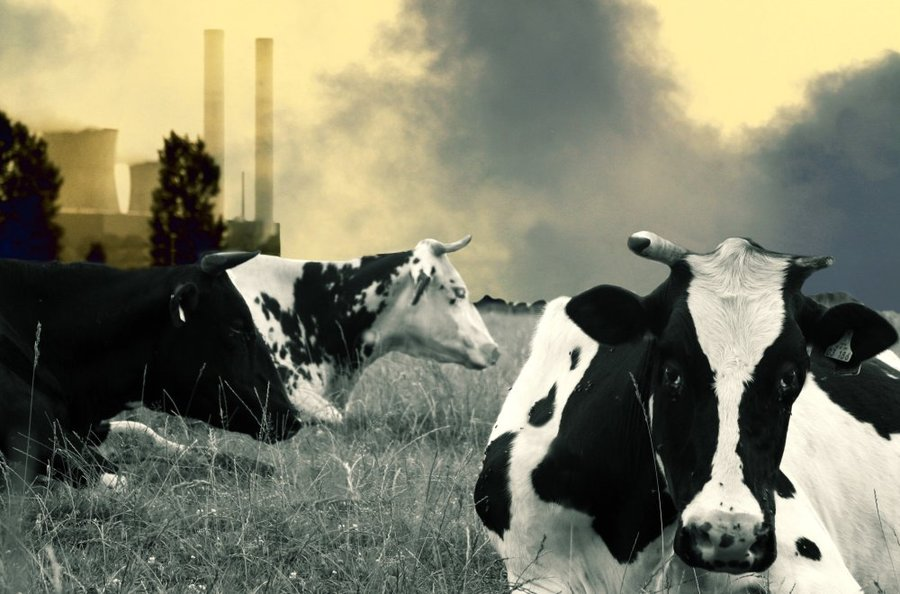 Why cutting back on meat is the best thing you can do for the planet.