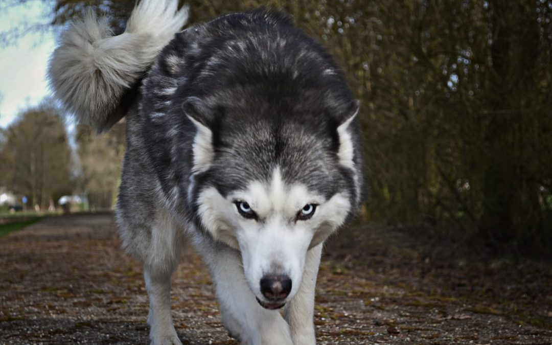 Corporations: a wolf in sheep's clothing?
