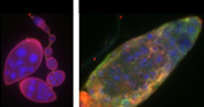 The role of cell adhesion molecules in signal transduction