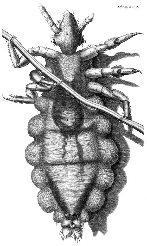 Hooke louse