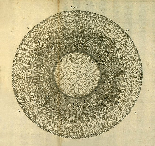 The Difficulties of Communicating What You Do (Not) See: Pamela Mackenzie on Early Modern Plants, Microscopy, and Visual Knowledge